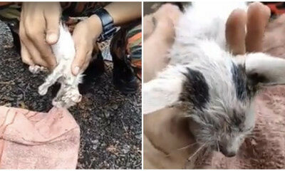 Kedah Firefighter Goes Viral After Resurrecting Drowning Kitten Back To Life in Disastrous Lekima Thunderstorm - WORLD OF BUZZ 4