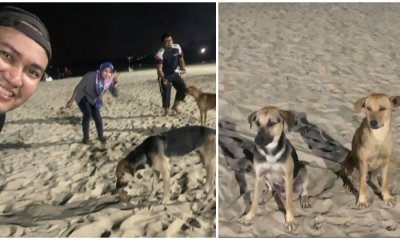Kind Muslims Feed Stray Dogs During Picnic at PD Beach Although They Cannot Touch Them - WORLD OF BUZZ 7