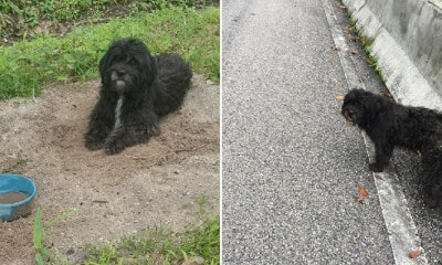 Loyal Doggo Walks 21km & Waits At Same Spot Where Former Owner Abandoned Him - WORLD OF BUZZ 9