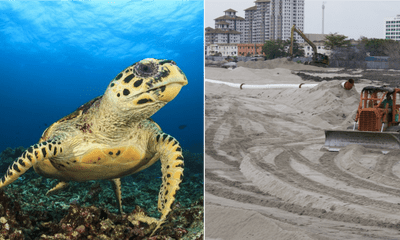 Melaka Hawksbill Turtles Might be Extinct as Their Nesting Grounds are Destroyed by Tourists and Development - WORLD OF BUZZ