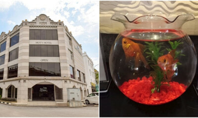 Melaka Hotel Offers Baby And Shark For Solo Travelers - WORLD OF BUZZ 1