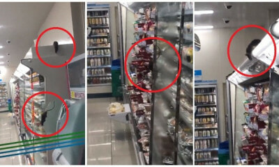 Video of Family Mart Infested With Rats Scampering Around the Outlet Goes Viral - WORLD OF BUZZ