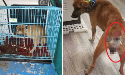 Someone Brutally Chopped Off This Cancer-Stricken Stray Dog's Tail in Johor, Leaves Her With Large Wound - WORLD OF BUZZ 5