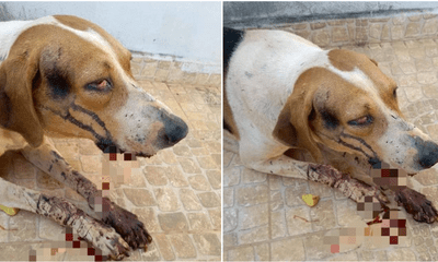 Stray Dog Severely Injured After Brutally Beaten By Irresponsible Individuals - WORLD OF BUZZ 4