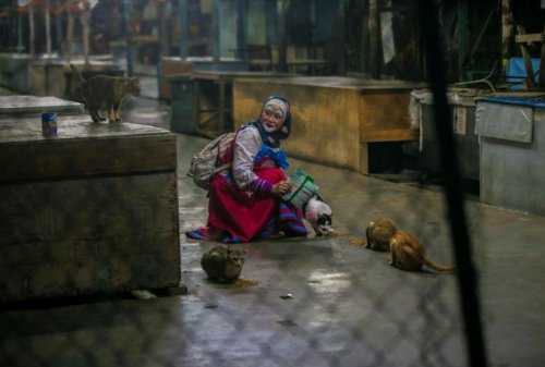 To Care For Stray Cats And Dogs, Perak Lady Dresses Up As A Clown For Funds - WORLD OF BUZZ 3