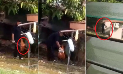 Videos of Cruel Malaysian Man Choking & Hitting 2 Puppies to Death with Stick in Gombak Go Viral - WORLD OF BUZZ 5