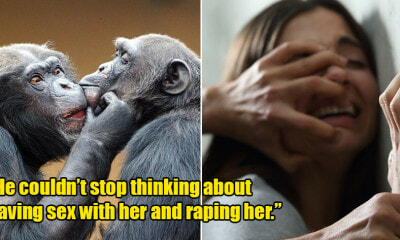 18yo Saw Chimpanzees Mating on TV Show, Gets Turned on & Tells Mum He Wants to Rape Her - WORLD OF BUZZ