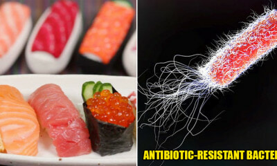 Study: Antibiotic-Resistant Bacteria Found in Sushi & Uncooked Seafood on the Rise - WORLD OF BUZZ