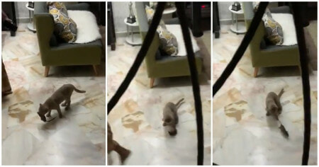 Cat Comes Bearing Gifts, Presents Owners With Live Rat Leaves Netizens Laughing - WORLD OF BUZZ