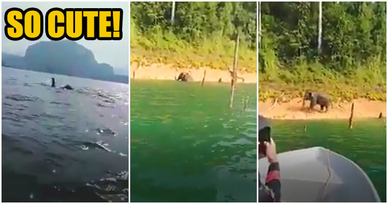 Caught On Camera: Rare Sighting Of Swimming Elephant - WORLD OF BUZZ
