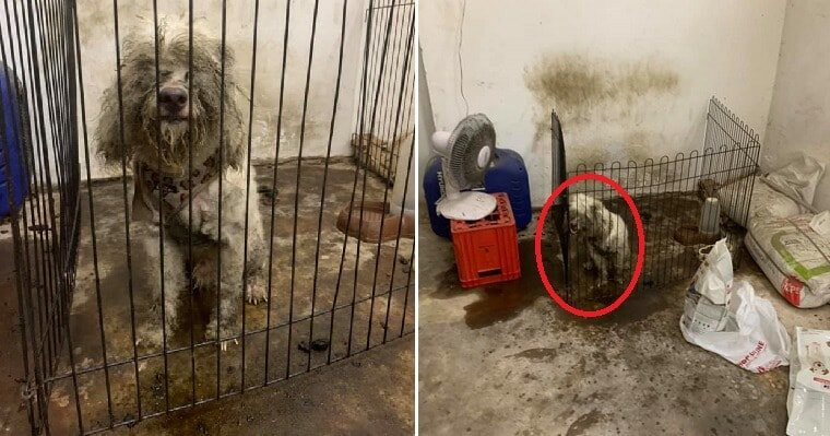 Dog Cruelly Dumped in Dirty & Dark Room After Family Decided He Wasn't Cute Anymore - WORLD OF BUZZ 7