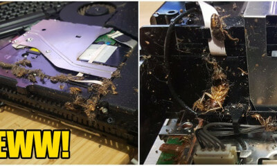 EWWWW!!! His PS4 Was Infested With Roaches And Apparently Its Common - WORLD OF BUZZ 18
