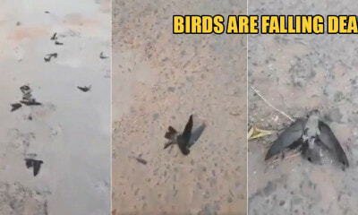 The Haze in Indonesia Is So Hazardous That Birds Are Falling Dead on the Streets - WORLD OF BUZZ