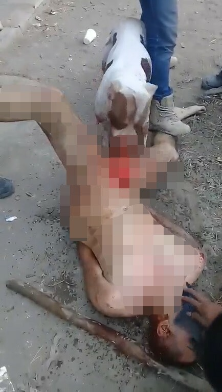 Gang Punishes Rapist By Stripping Him Naked & Allowing Dog to Tear Off His Genitals - WORLD OF BUZZ 3