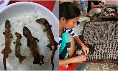 'Gecko Rice Bowls' are Hugely Popular In Vietnam, and Netizens are Grossed Out! - WORLD OF BUZZ