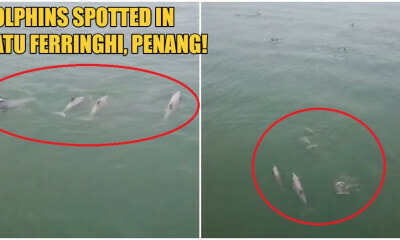 Hundreds Of Dolphins Were Spotted Swimming Merrily At The Batu Ferringhi Beach - WORLD OF BUZZ