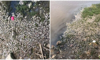 Land Reclamation Projects Nearby Pantai Lido Kill Hundreds of Fish In the Area - WORLD OF BUZZ