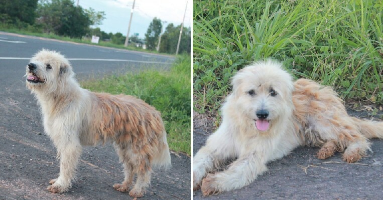 Lost Doggy Waits Faithfully By Roadside For Owner, Finally Reunited 4 YEARS Later - WORLD OF BUZZ 6