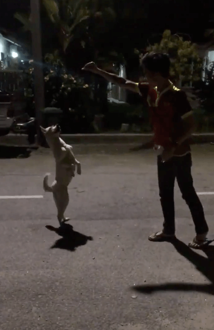 Malaysian Befriended Stray Dog, But It Was Cruelly Captured After Someone Reported About It - WORLD OF BUZZ 3
