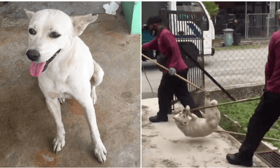 Malaysian Befriended Stray Dog, But It Was Cruelly Captured After Someone Reported About It - WORLD OF BUZZ 4