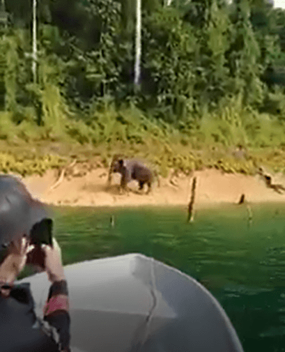 Rare Footage Of Swimming Elephant At Tasik Kenyir - WORLD OF BUZZ