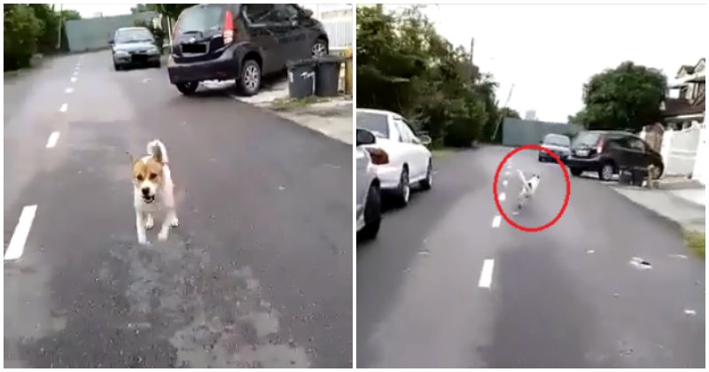Watch: Postman Gets Chased By Neighbourhood Dogs, Only To Adorably Chase Them Back - WORLD OF BUZZ