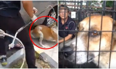 Captured MPSJ Stray Dog Is ALIVE & Up For Adoption - WORLD OF BUZZ 5