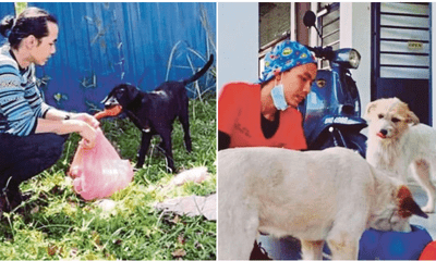 Doctor Uses His Own Money To Treat 200 Stray Dog Even Though He Is Mocked By The Public - WORLD OF BUZZ 3