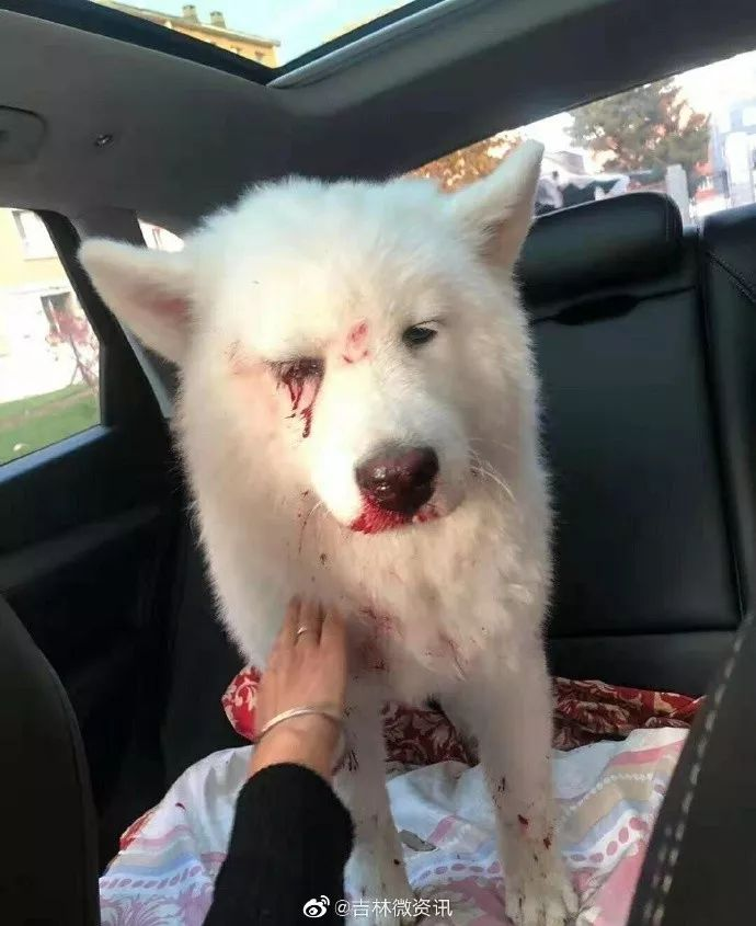 Dog Loses 1 Eye & Suffers Severe Injuries After Owner Brutally Hit It for Pooping & Peeing In House - WORLD OF BUZZ 1