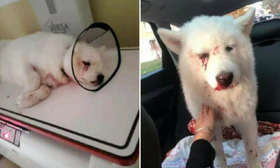 Dog Loses 1 Eye & Suffers Severe Injuries After Owner Brutally Hit It for Pooping & Peeing In House - WORLD OF BUZZ 7