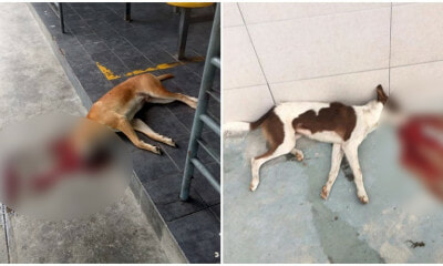 5 Dogs Allegedly Poisoned To Death In Shah Alam Found In Pools of Their Own Blood - WORLD OF BUZZ