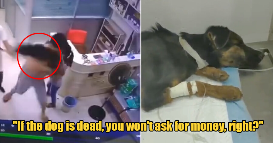 Violent Pet Owner Takes Home Sick Dog After He Violently Threw it To The Floor to Kill It - WORLD OF BUZZ