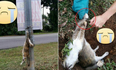Mother Cat Was Found Dead In Klang As She Was Cruelly Strung Up An Electrical Pole - WORLD OF BUZZ