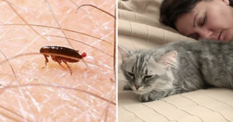 Girl Hears Weird Rustling Sound in Ear, Discovers It's Fleas From Sleeping with Cat - WORLD OF BUZZ
