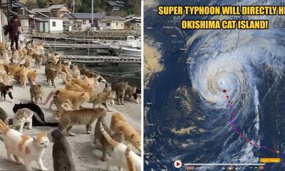 Japan's Famous Okishima Cat Island Is at Risk of Being - WORLD OF BUZZ 5
