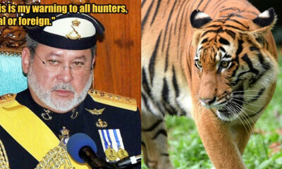 Johor Sultan Urges PERHILITAN to Improve Wildlife Preservation to Protect Our Tigers - WORLD OF BUZZ 1