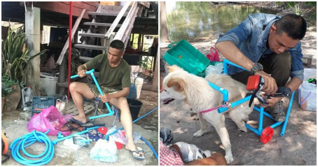 Kind-Hearted Man Helped Over 100 Handicapped Dogs Walk Again By Building Them Wheelchairs - WORLD OF BUZZ