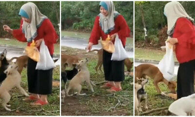 Malay Lady Feeding A Pack Of Dogs Gets Thumbs Up From Netizen, Says That It Was A First For Him - WORLD OF BUZZ 1