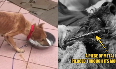 Miri Woman Abuses ELEVEN Dogs, 1 of Them Bit the Cage Due to Extreme Hunger - WORLD OF BUZZ