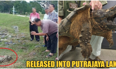 Netizens Outraged After People Released A Snapping Turtle Into The Putrajaya Lake - WORLD OF BUZZ