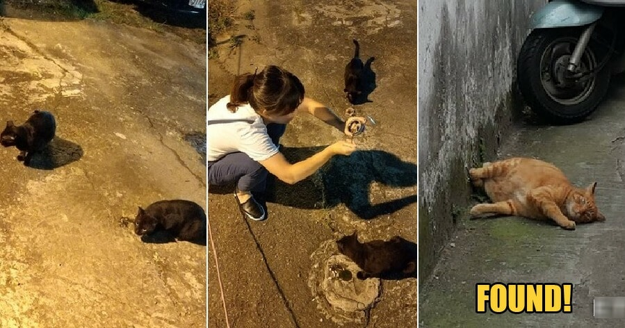 Owner Desperately Looking for Missing Pet Asks Stray Cat for Help & It Actually Worked! - WORLD OF BUZZ 3
