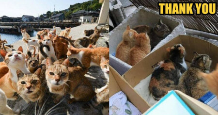 Phew! The Cats in Okishima, Japan Are Relocated to a Safe Place While The Typhoon Hits - WORLD OF BUZZ