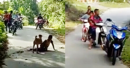 12yo Boy From Langkawi Attacked and Bitten by Dog, Men Stood There and Watched - WORLD OF BUZZ