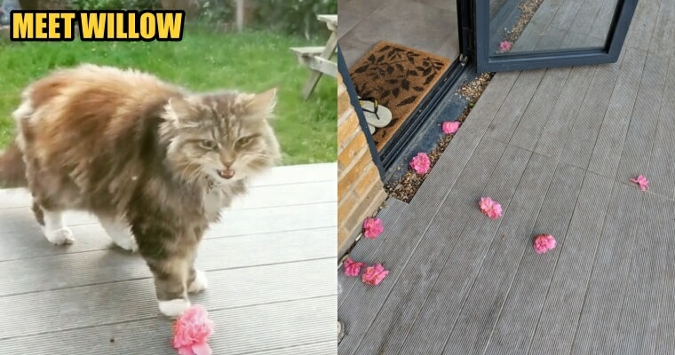 A Friendly Neighbourhood Cat Brings Pink Flowers to This Woman's Garden Regularly - WORLD OF BUZZ 4