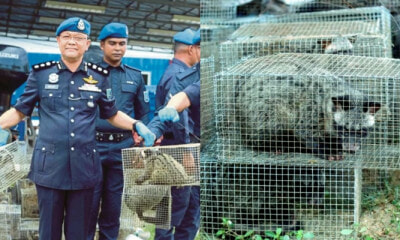 A Smuggling Attempt Involving 642 Exotic Animals Was Busted By Malaysian Marine Cops - World Of Buzz