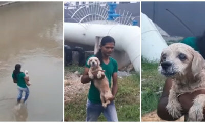 Brave Lady Saves Shih Tzu Who Was Thrown Into The River Near Sungai Langat - World Of Buzz 1