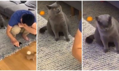 Cat's Look of Utter Jealousy As Owner Plays With New Kitten is The Most Relatable Thing Ever - WORLD OF BUZZ