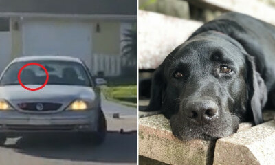 Dog Puts Car Into Reverse & Drives It In Circles For One Hour, Locks Owner Out of Car - WORLD OF BUZZ 3
