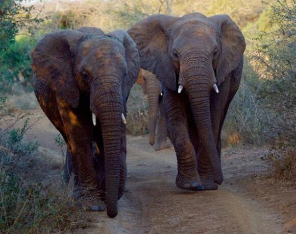Elephants mourning - WORLD OF BUZZ 1