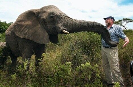 Elephants mourning - WORLD OF BUZZ 3